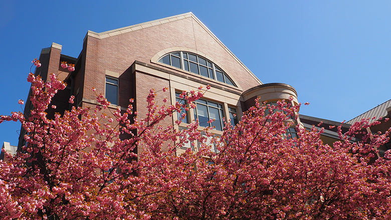 Cherry blossoms on campus in spring